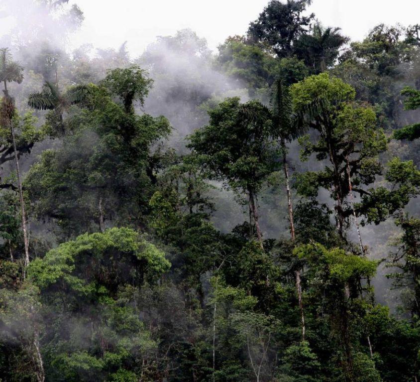 Mashpi-Lodge-Cloud-Forest-1200x800