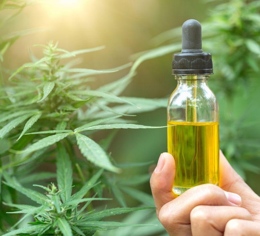 Hemp oil, Hand holding bottle of Cannabis oil against Marijuana plant, CBD oil pipette